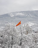 Macedonian Flag rising from the snowy trees Royalty Free Stock Photos