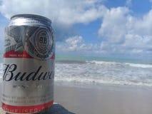 MACEIO, AL, БРАЗИЛИЯ - 12-ое мая 2019: Пиво Budweiser холодное и красивые небо и море позади стоковые фотографии rf