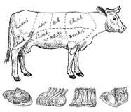 macelleria illustrazione vettoriale
