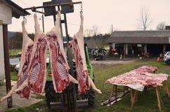 Macello del maiale, tempo di uccisione del maiale Fotografia Stock Libera da Diritti