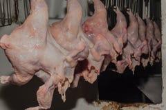 Macello del pollame dei polli fotografia stock