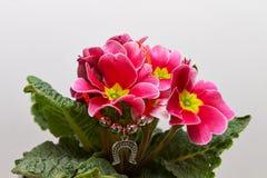 Maceta con las flores rosadas y amarillas Fotos de archivo