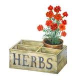 Maceta con las maravillas en un jardín viejo del cajón de madera Imagenes de archivo
