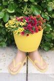 Maceta de la chancleta con las flores Foto de archivo libre de regalías