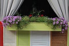 Maceta de madera con las flores en la ventana Superficie para el inscrip Foto de archivo libre de regalías
