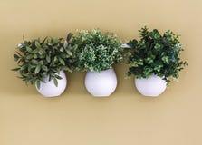 Maceta de tres blancos con las flores que cuelgan en la pared Imagen de archivo libre de regalías