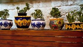Maceta decorativa con la decoración del succulent y de la flor malta Fotografía de archivo libre de regalías