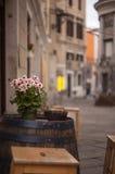 Maceta en barril Foto de archivo libre de regalías