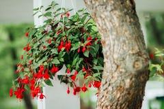 Maceta en el árbol Imagen de archivo libre de regalías