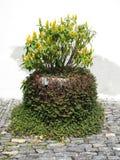 Maceta przeciwu Ornamento De Plant Césped Verde Y Flores Amarillas przeciw Blanco zdjęcia royalty free