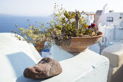 Maceta soleada en Oia, santorini, Grecia Fotos de archivo libres de regalías