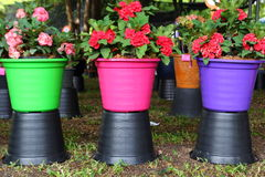 Macetas coloridas. Fotografía de archivo libre de regalías