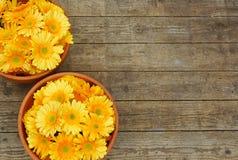 Macetas con las flores amarillas en fondo de madera Imagenes de archivo