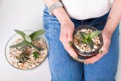 Macetas con los succulents Imagen de archivo libre de regalías