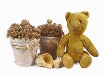 Macetas, conchas de berberecho y un oso del juguete Imagen de archivo