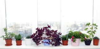 Macetas en crisoles en un travesaño de la ventana Fotografía de archivo libre de regalías