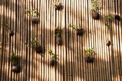 Macetas orgánicas en la pared del bambú fotos de archivo