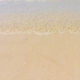 Macha na plaży Fotografia Royalty Free