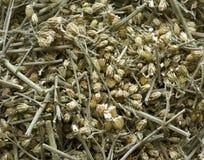 Machacado secado encima de hierba curativa. Foto de archivo
