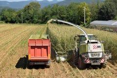 Machacamiento y maceración del trigo para hacer el bio gas en la Brescia foto de archivo