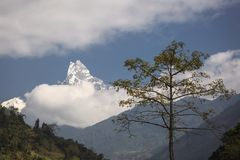 Machachupare Fishtail Peak with white clouds surrounded. Himalaya Mountain Nepal . Stock Photography