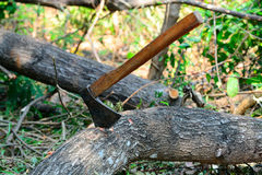 machado Fotografia de Stock