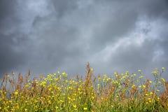 Machair wilde bloemen onder de donkere stormachtige hemel Royalty-vrije Stock Afbeelding