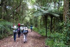 Machame Route Kilimanjaro. Trekking kilimanjaro tanzania machame tour Stock Photo
