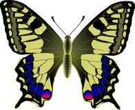 Machaon Royalty Free Stock Photography