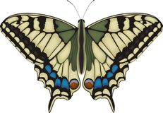Machaon butterfly. An illustration of a detailed Machaon butterfly Royalty Free Stock Photography