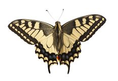 Machaon butterfly with open wings in, top view, isolated on whit royalty free stock photos