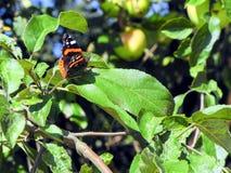 Machaon de la mariposa que se sienta en una hoja verde foto de archivo