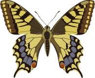 Machaon de Papilio Fotos de archivo