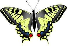 Machaon de Papilio Imagenes de archivo