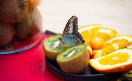 Machaon di papilio della farfalla di Machaon sulla frutta fresca Fotografia Stock Libera da Diritti