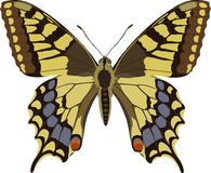 machaon papilio 向量例证