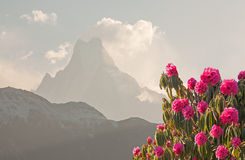 Machapuchare Peak Rhododendrons Stock Photo