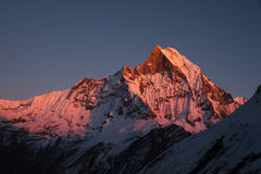 Machapuchare at sunset. The Fish tail or Machapuchare peak glows at sunset in the Himalayas. As seen from the Annapurna Base Camp Stock Images
