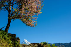 The Machapuchre in Nepal Royalty Free Stock Photo