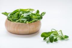 Mache, salada de milho, erva-benta no fundo branco Fotos de Stock