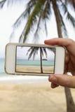 Machen des Fotos der Palme mit Mobilhandy Stockbild