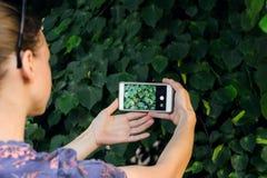 Machen eines Fotos mit einem intelligenten Telefon Lizenzfreies Stockfoto