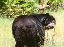 Machen Sie Bären naß lizenzfreie stockbilder