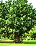 Machen Sie Bäume Ihre Religion, denn sie geben und geben und als Ausgleich bitten um nichts Stockfotografie