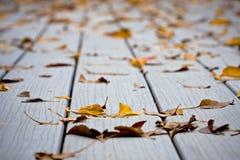 Machen Sie Blätter auf Decking naß Stockfotografie