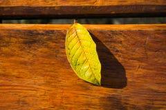Machen Sie Blätter auf der Bank nass Stockfoto