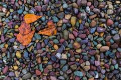Machen Sie Blätter auf einer Flussbank nass Stockfotos