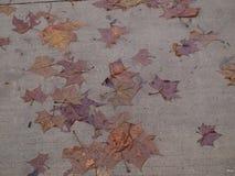Machen Sie Blätter auf einer Spur nass Stockbild