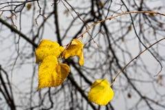 Machen Sie Blätter im Spätherbst nass Lizenzfreies Stockfoto