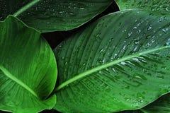 Machen Sie Blätter naß Stockbild
